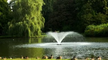 Park with fountains in summer time — Vídeo de stock