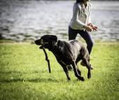 Young girl and dog on the grass — Stock Photo