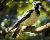 Běžné černý pták — Stock fotografie