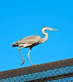 Heron on the roof — Stock Photo