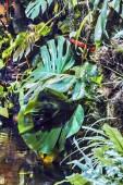 Beautiful rainforest — Stock Photo