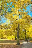 Sunny path in park — Stock Photo