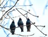 Three cuties singing — Stock Photo