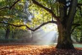 Mighty oak tree — Stock Photo