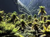 Beautiful palm trees — Stock Photo
