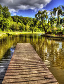 Forest lake — Stock Photo