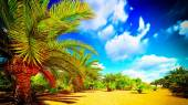 African oasis — Stock Photo