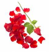 红色的玫瑰花瓣 — 图库照片