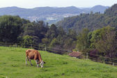 Cow grazing on a green pasture. — Stock Photo