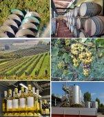 Set of images of winemaking — Stock Photo