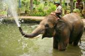 Elephant keeper — Stock Photo