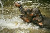 The elephant in water — Photo