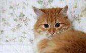 Ritratto di un giovane gatto — Foto Stock