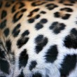 Skin of the leopard — Stock Photo #69951623