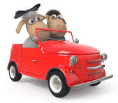 Cheerful lambs drive the car — Stock Photo