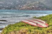 Vintage surfboard on a green bush by the shore — Stockfoto