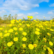 Clouds over yellow flowers — Stock Photo #69511285