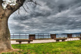 Benches and tree by the shore — Foto Stock