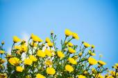 Sky and flowers — Stock Photo