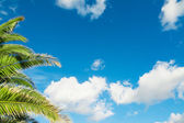 Palm branches under a blue sky — Stock Photo