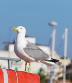 Close up of a seagull standing on a boat — Stock Photo