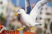 Seagull landing on a boat — Stock Photo