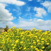 青空の下で黄色の花 — ストック写真