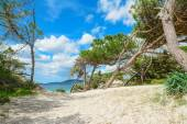 Pine trees by Alghero shoreline — Stock Photo