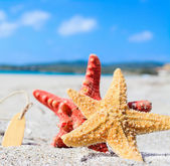 Starfish by the sea — Stock Photo