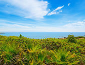Green plants by the sea in Alghero — Stock Photo
