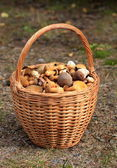 Basket full of edible mushrooms — Zdjęcie stockowe
