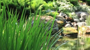 Sedge on a background of a mountain stream — Stock Video