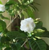 Overdekt bloemen — Stockfoto