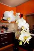 Branch of blossoming yellow orchid in luxurious kitchen — Stock fotografie