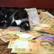 ������, ������: Cat lying on the carpet with Ukrainian money