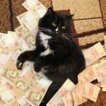 Постер, плакат: Cat lying on the carpet with Ukrainian money