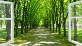 Window opened to the beautiful park with many green trees — Stock Photo