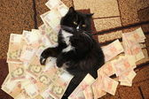 Cat lying on the carpet with Ukrainian money — Stockfoto