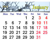 Calendar for the January of 2015 with winter sparrows — Stock Photo