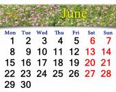 Calendar for June of 2015 year with wild carnation — Stock Photo