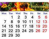 Calendar for September of 2015 with bumblebee on the tagetes — Stock Photo