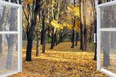 Opened window to autumn park — Stock Photo