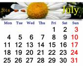 Calendar for July 2016 with ladybird on the white camomile — Stock Photo