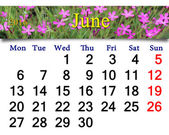 Calendar for June 2016 with image of wild carnation — Stock Photo