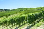 Paisagem de verão em langhe (itália) — Fotografia Stock