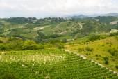 Summer landscape in Monferrato (Italy) — Stock Photo