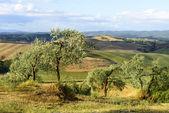 Crete Senesi (Tuscany, Italy) — Stock fotografie