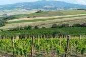 Montalcino (Toskana, İtalya) — Stok fotoğraf
