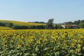 Summer landscape in Marches (Italy) — Stok fotoğraf