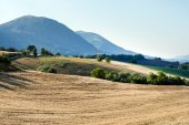 Summer landscape in Marches (Italy) — Stock Photo